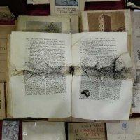 SDC - Libri e arte
